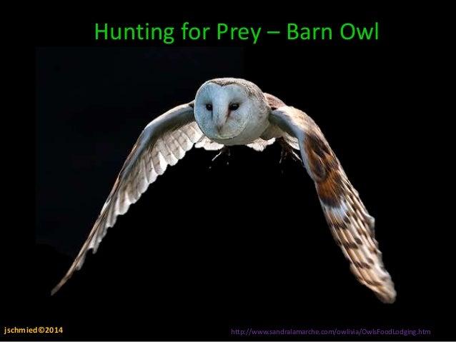 Owl Adaptations Amp Food Webs Present