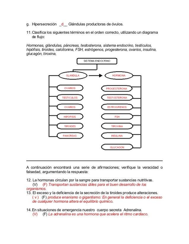 Vistoso Diagrama De Todos Los órganos En El Cuerpo Bandera ...