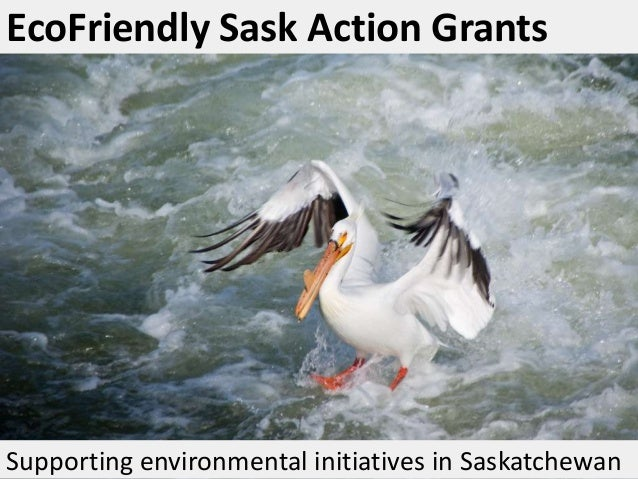 EcoFriendly Sask Action Grants  Supporting environmental initiatives in Saskatchewan
