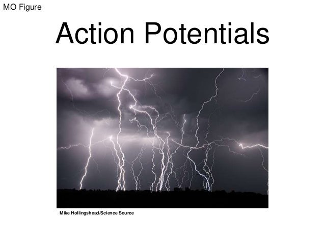 MO Figure  Action Potentials  Mike Hollingshead/Science Source