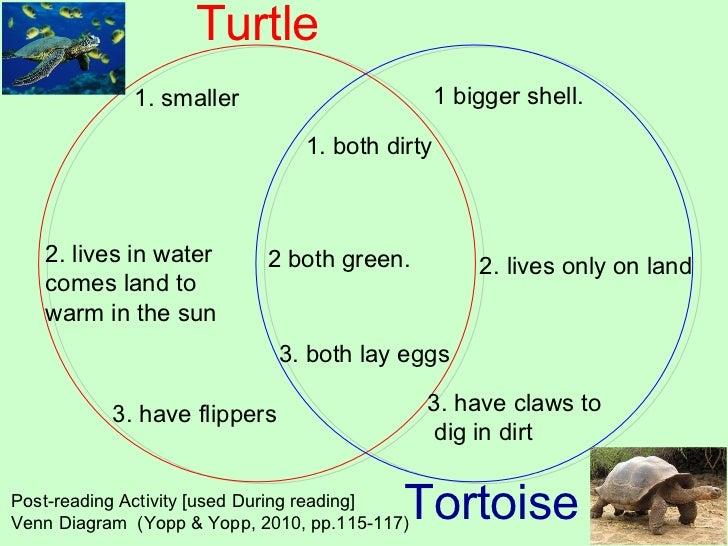 Sea Turtle Venn Diagram Diagram