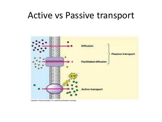 Active Passive Transport
