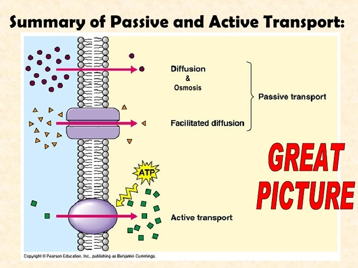 Passive And Active Transport Worksheet 6 Answers ...