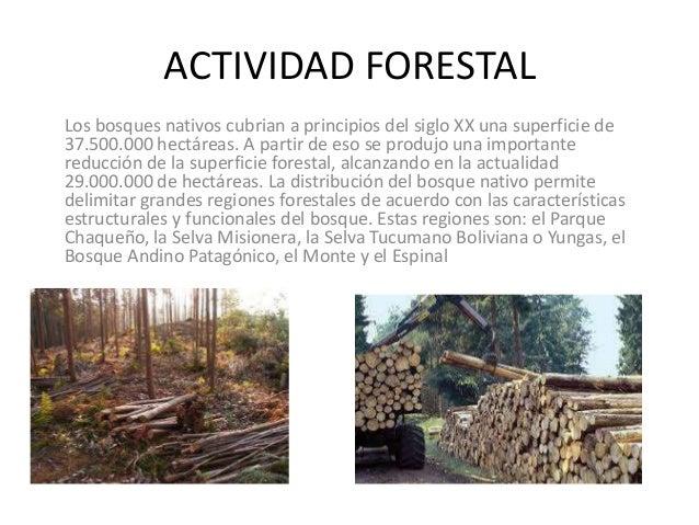 Actividad forestal for Importancia de los viveros forestales