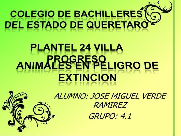 INDICETITULOINTRODUCCIONOSO POLAR Y TIGRE DEBENGALAEL CANGUROLA BALLENAEL PINGÜINOCACATUA DE CRESTAAMARILLAIMAGENES