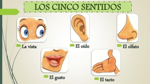 Actividad 2 izquierdo rodr guez los cinco sentidos for El divan de los sentidos