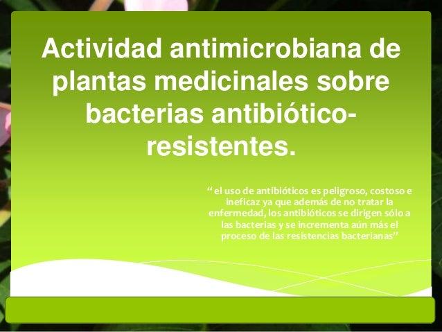 """Actividad antimicrobiana de plantas medicinales sobre bacterias antibiótico- resistentes. """" el uso de antibióticos es peli..."""