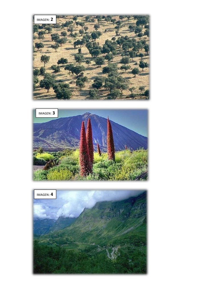 Actividad comentario imagenes paisajes naturales