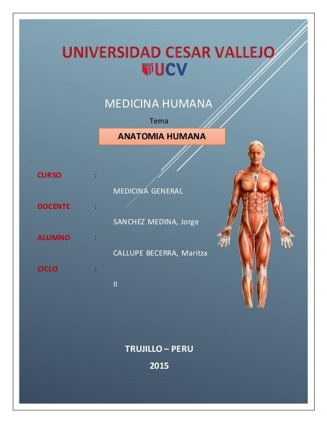 MEDICINA HUMANA Tema ANATOMIA HUMANA CURSO : MEDICINA GENERAL DOCENTE : SANCHEZ MEDINA, Jorge ALUMNO : CALLUPE BECERRA, Ma...