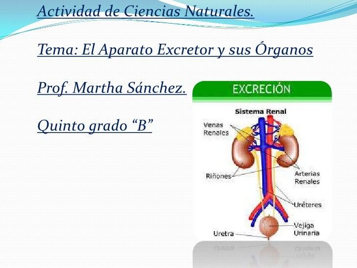 """Actividad de Ciencias Naturales.Tema: El Aparato Excretor y sus ÓrganosProf. Martha Sánchez.Quinto grado """"B"""""""