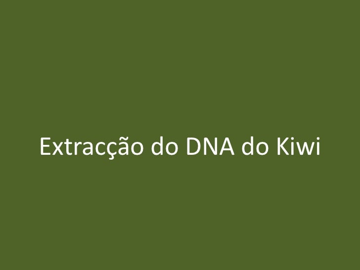 Extracção do DNA do Kiwi