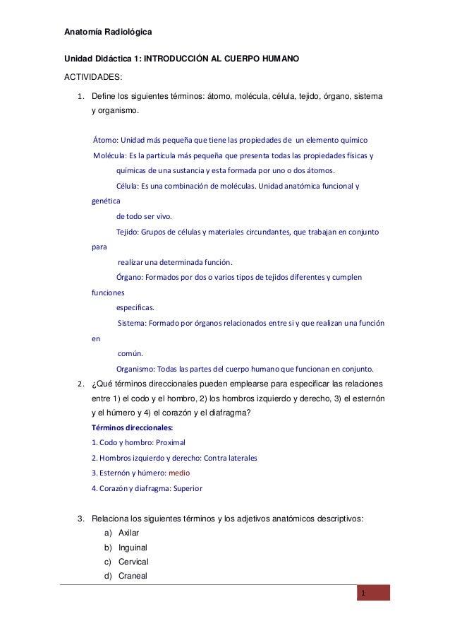 Anatomi radiologica(principiantes)