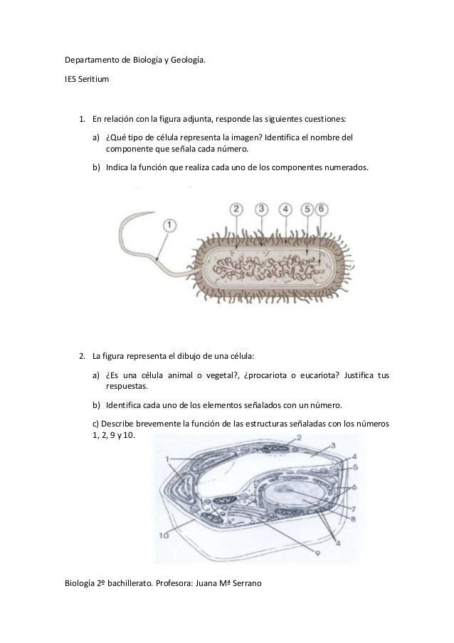 Departamento de Biología y Geología. IES Seritium  1. En relación con la figura adjunta, responde las siguientes cuestione...