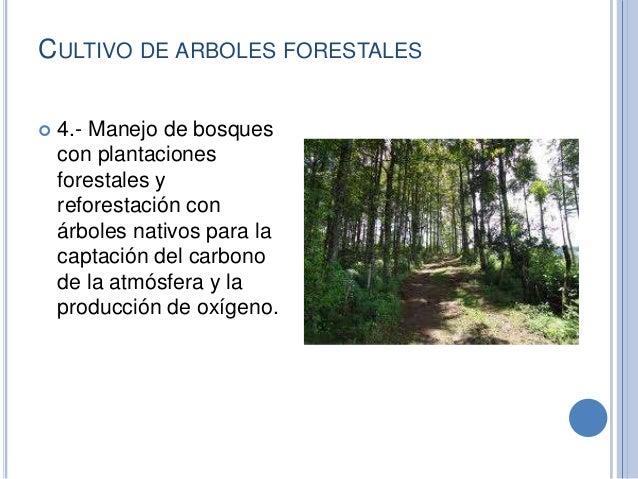 Actividades Económica de la selva