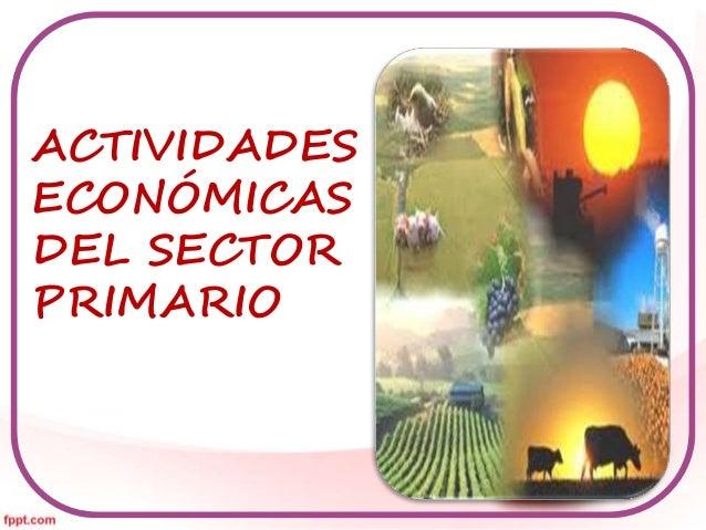 ACTIVIDADES  ECONÓMICAS  DEL SECTOR  PRIMARIO