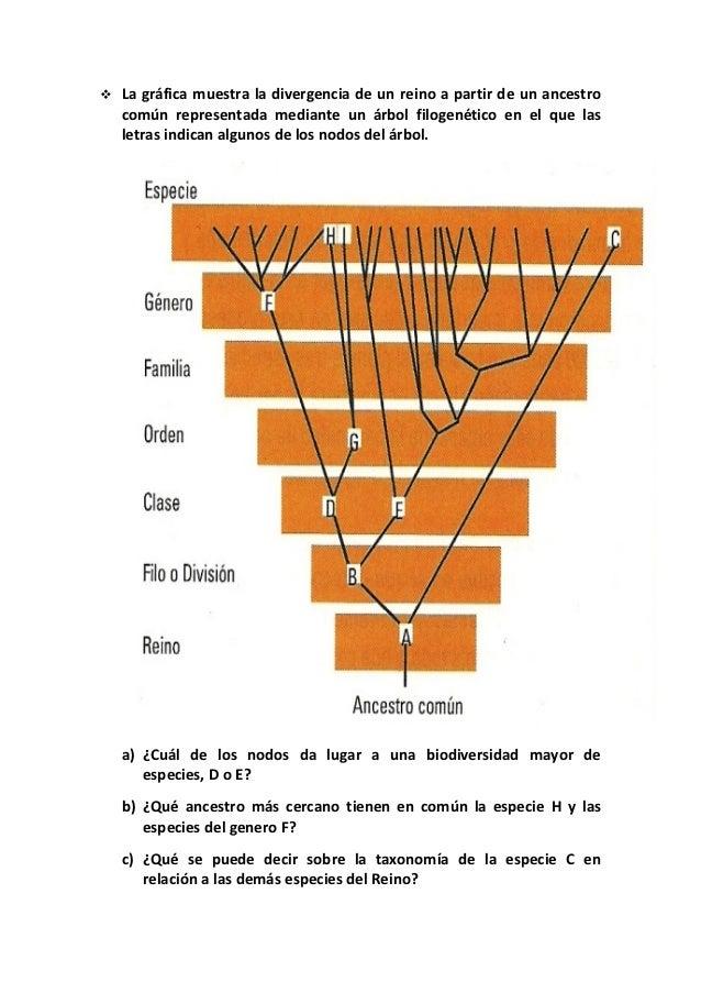    La gráfica muestra la divergencia de un reino a partir de un ancestro    común representada mediante un árbol filogené...