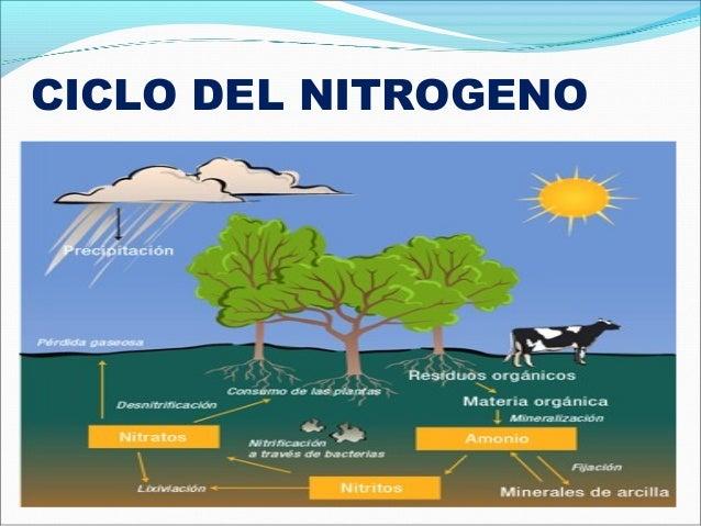 El Ciclo del Nitrógeno en un Acuario - YouTube