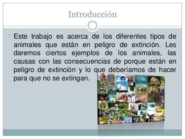 Introducción Este trabajo es acerca de los diferentes tipos de animales que están en peligro de extinción. Les daremos cie...