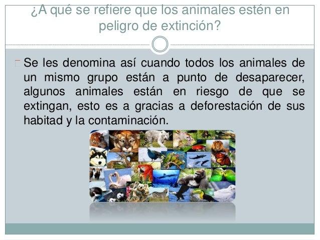 ¿A qué se refiere que los animales estén en peligro de extinción? Se les denomina así cuando todos los animales de un mism...