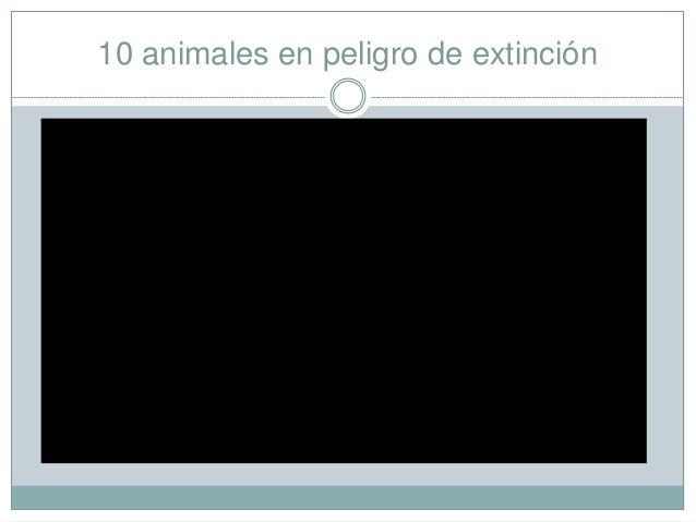 10 animales en peligro de extinción