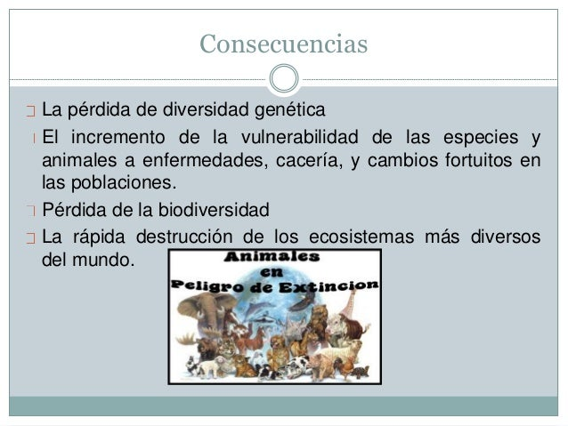 Consecuencias La pérdida de diversidad genética El incremento de la vulnerabilidad de las especies y animales a enfermedad...