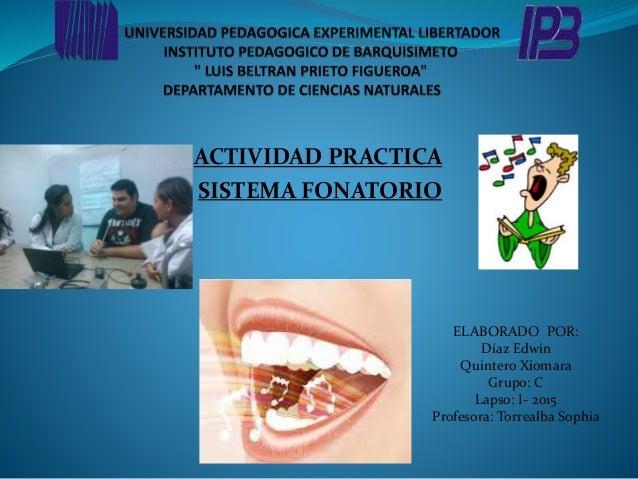 ACTIVIDAD PRACTICA SISTEMA FONATORIO ELABORADO POR: Díaz Edwin Quintero Xiomara Grupo: C Lapso: I- 2015 Profesora: Torreal...
