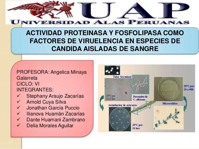 ACTIVIDAD PROTEINASA Y FOSFOLIPASA COMO    FACTORES DE VIRUELENCIA EN ESPECIES DE          CANDIDA AISLADAS DE SANGREPROFE...