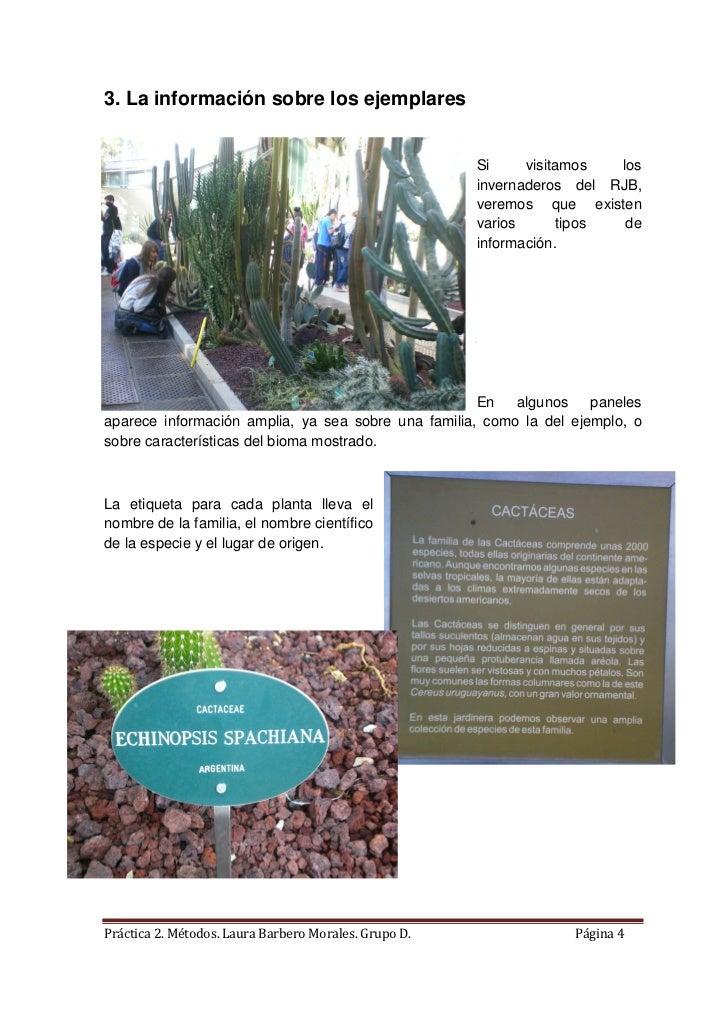 Actividad visita al jardin botanico for Informacion sobre el jardin botanico