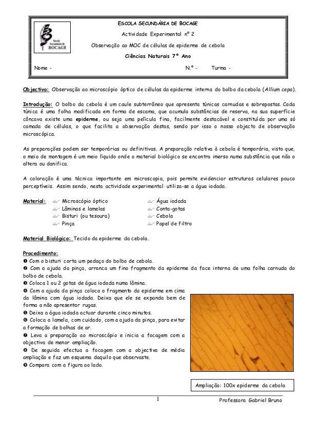 Professora Gabriel Bruno1 ESCOLA SECUNDÁRIA DE BOCAGE Actividade Experimental nº 2 Observação ao MOC de células de epiderm...