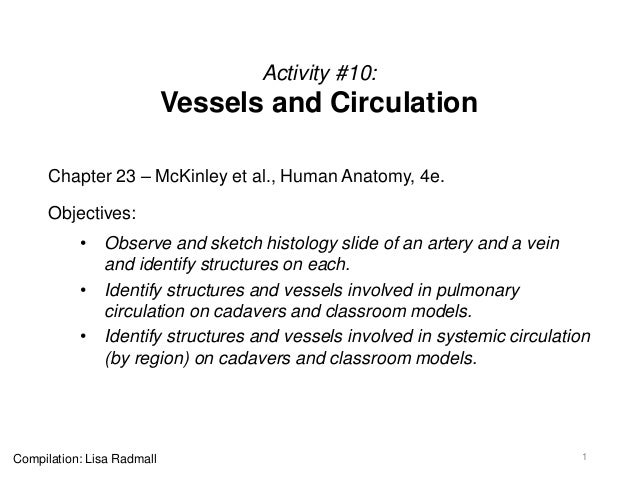 Activity #10: Vessels and Circulation Chapter 23 – McKinley et al., Human Anatomy, 4e. Objectives: • Observe and sketch hi...