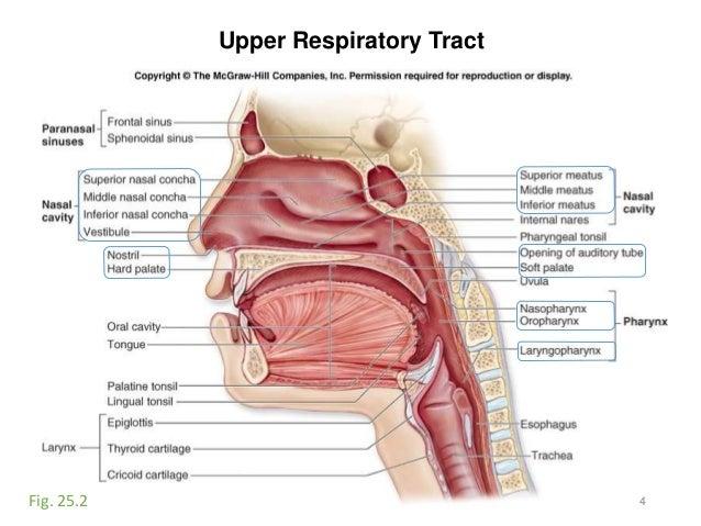 Activity Respiratorydigestive