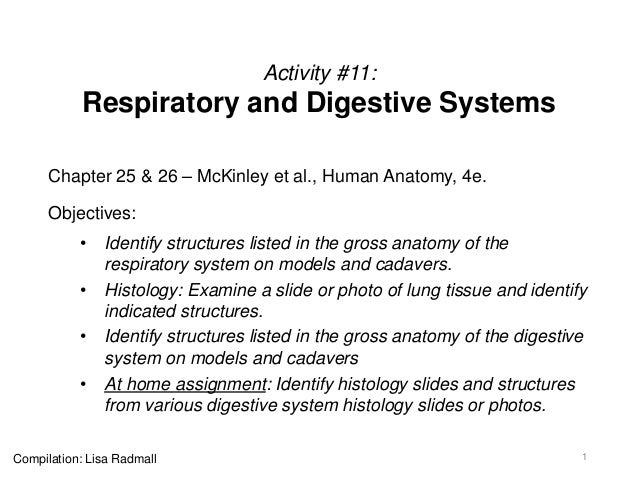 Activity #11: Respiratory and Digestive Systems Chapter 25 & 26 – McKinley et al., Human Anatomy, 4e. Objectives: • Identi...