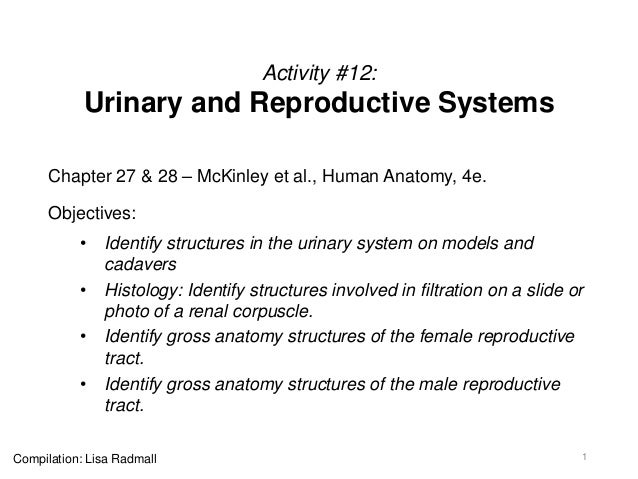 Activity #12: Urinary and Reproductive Systems Chapter 27 & 28 – McKinley et al., Human Anatomy, 4e. Objectives: • Identif...