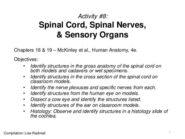 Activity #8: Spinal Cord, Spinal Nerves, & Sensory Organs Chapters 16 & 19 – McKinley et al., Human Anatomy, 4e. Objective...