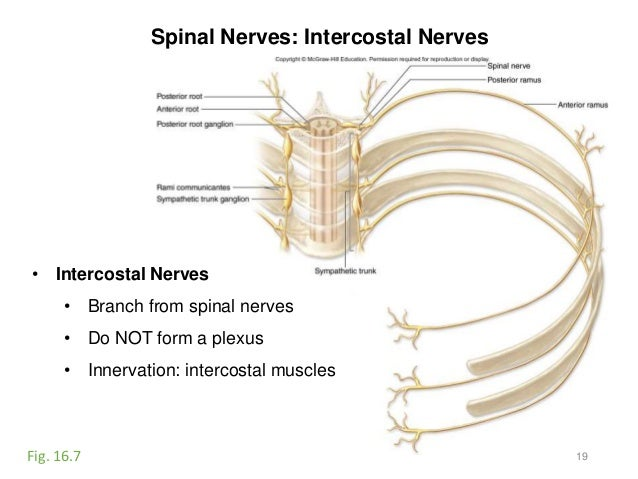 Activity 8-spinal cord-eye-ear-2