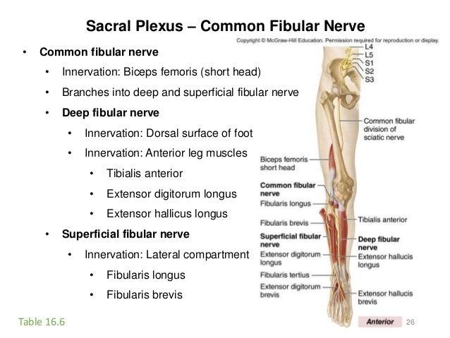 Activity 8-spinal cord-eye-ear-2