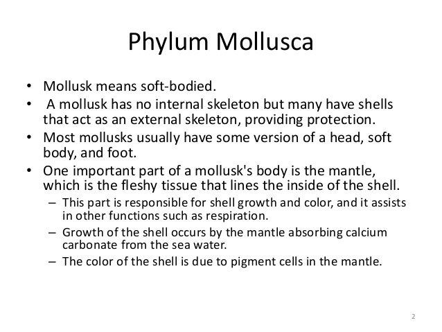 Phylum Mollusca • Mollusk means soft-bodied. • A mollusk has no internal skeleton but many have shells that act as an exte...