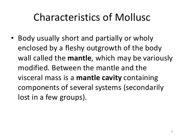 Characteristics of Mollusc • Body usually short and partially or wholy enclosed by a fleshy outgrowth of the body wall cal...