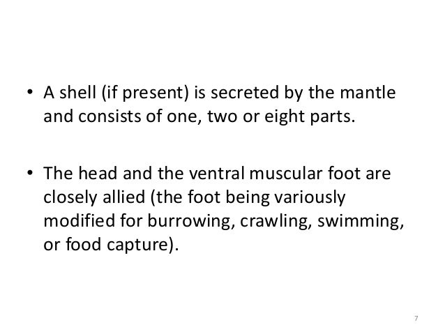 • A shell (if present) is secreted by the mantle and consists of one, two or eight parts. • The head and the ventral muscu...