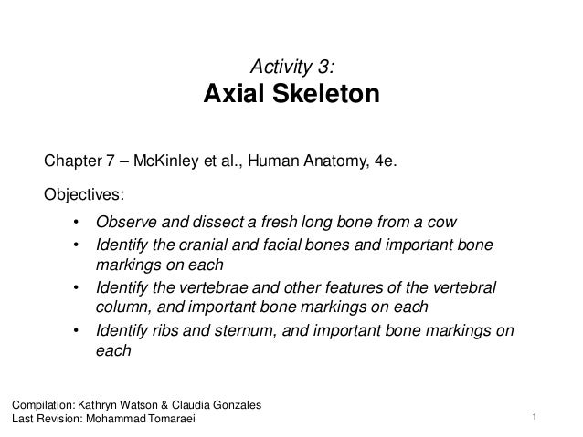 Activity 3: Axial Skeleton Chapter 7 – McKinley et al., Human Anatomy, 4e. Objectives: • Observe and dissect a fresh long ...