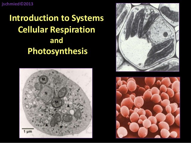 Introduction to Systems Cellular Respiration and Photosynthesis jschmied©2013