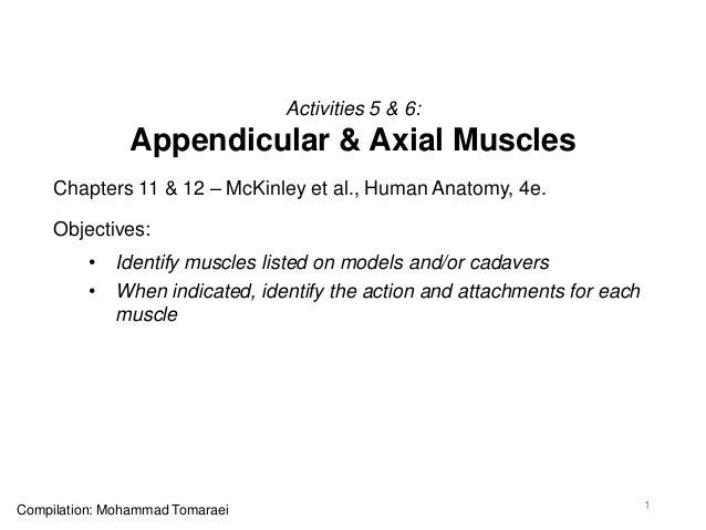 Activities 5 & 6: Appendicular & Axial Muscles Chapters 11 & 12 – McKinley et al., Human Anatomy, 4e. Objectives: • Identi...