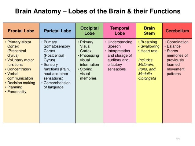 what lobe of the brain controls motor functions. Black Bedroom Furniture Sets. Home Design Ideas