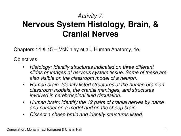Activity 7: Nervous System Histology, Brain, & Cranial Nerves Chapters 14 & 15 – McKinley et al., Human Anatomy, 4e. Objec...