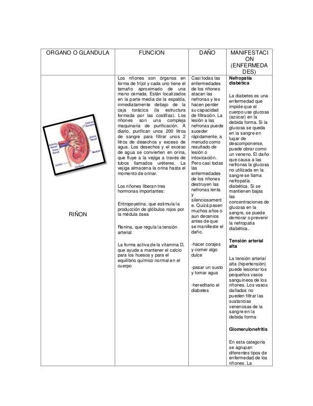Moderno Cuerpo Tabla De Localización De órgano Regalo - Anatomía de ...