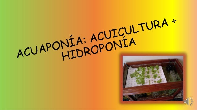 La acuaponía es un sistema de producción de vegetales y animales acuáticos de forma conjunta. Al aprovechar la simbiosis ...