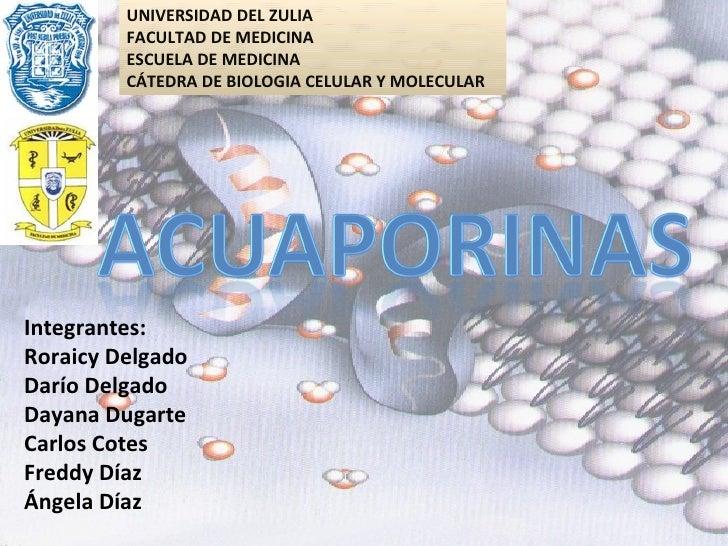 UNIVERSIDAD DEL ZULIA FACULTAD DE MEDICINA ESCUELA DE MEDICINA CÁTEDRA DE BIOLOGIA CELULAR Y MOLECULAR Integrantes: Roraic...
