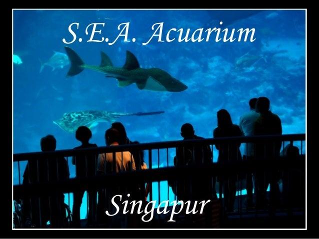 Singapur S.E.A. Acuarium