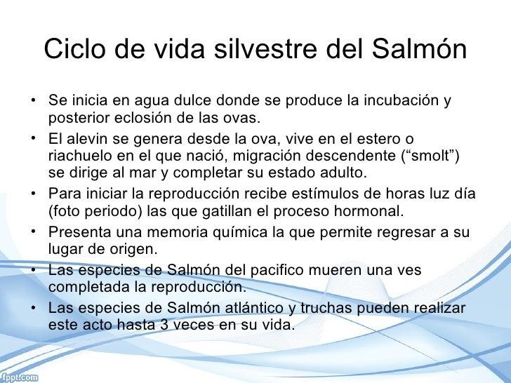 Acuicultura del salmon for Tipos de estanques para acuicultura