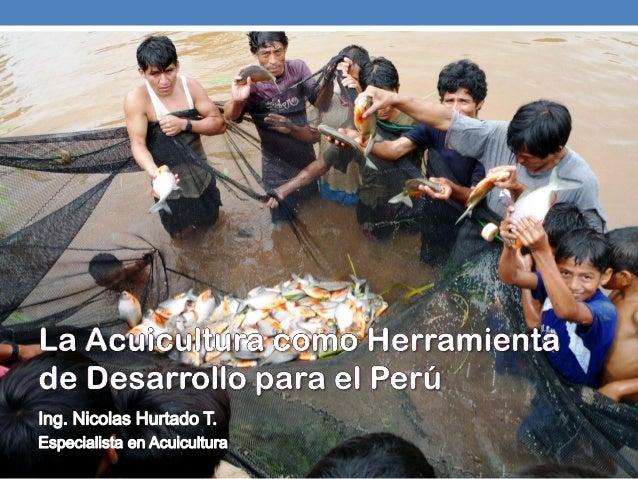 Agenda:Producción mundial de pescadoAcuicultura y seguridad alimentariaBeneficios y limitantesNiveles de actuacion y proye...